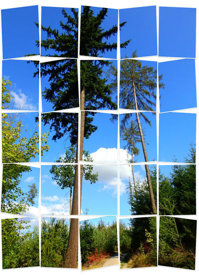 Tree Plant Sky Transfer Print Nature Day No People Growth Auto Post Production Filter Sunlight Beauty In Nature Cloud - Sky Tranquility Outdoors Tranquil Scene Land Blue Window Scenics - Nature Forest Digital Composite Trees Big Picture