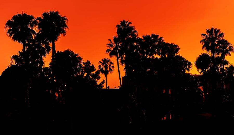 Embers of Fame Hollywood Sunset Silhouettes Sunset_collection Los Angeles, California Palm Tree Palm Trees Palm Palms Ciityscapes City Urban Travel Photography California Vibrant Color Landscape_Collection Tree Tree Area Sunset Silhouette Orange Color Sky Landscape