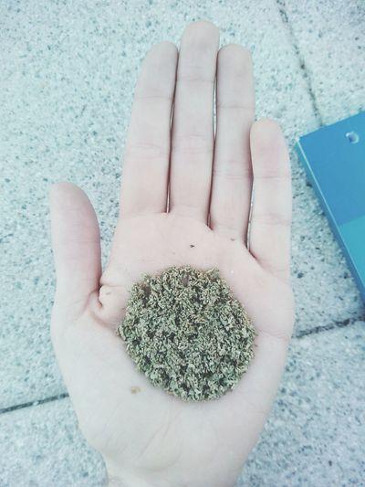 Lady Rasta returns Weed Mucha Weed Joint Porro