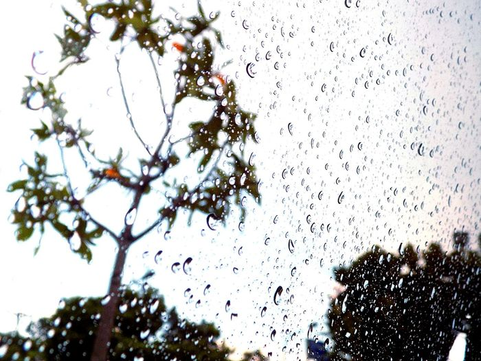 Droplets Rainy Day Water Droplets Window Drops Light Drops Photooftheday Shotoftheday