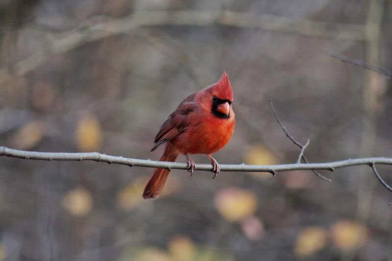 Bird perching on branch outdoors