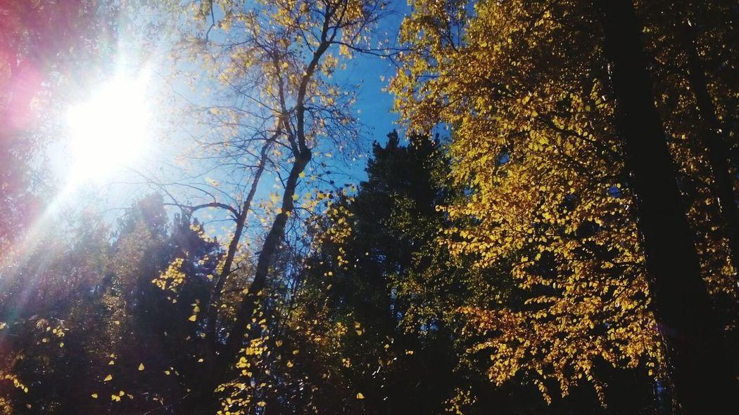 Yellow Color Naturelovers Sun Beautiful Бурятия Buryatia, Russia, Ulan-Ude