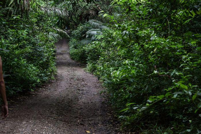 Taking Photos Parque Nacional Soberanía Canal De Panama  senderos Wildlife & Nature