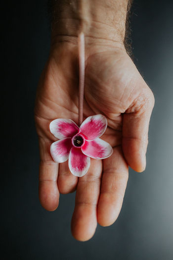 Close-up of hand holding flower against black background