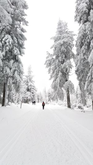 Snow Winter Cold Temperature Nature Beauty In Nature The Week On EyeEm Lost In The Landscape