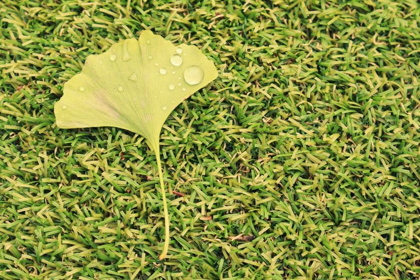 Green Color Leaf Nature Growth Drop Wet No People