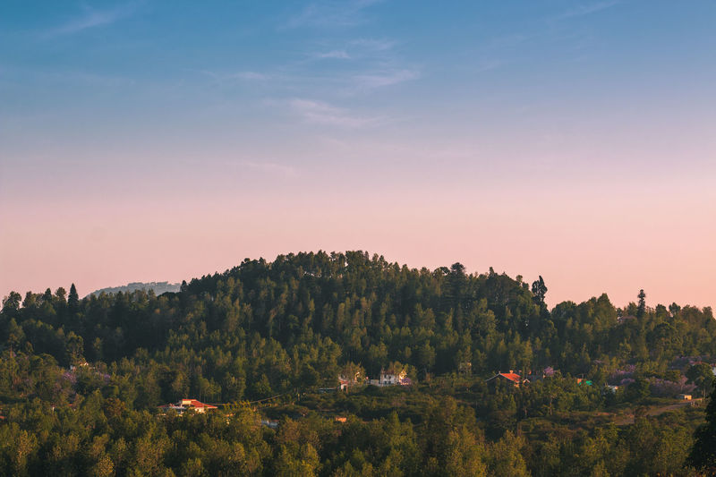 complicated lighting situations .. Travel Dawn Yercaud Hills Earth Travel Destinations Lush Nature Wild Sky Beauty In Nature Pine Tree Orange Sky Blue Hike Landscape Variation Sunrise Tree Rural Scene Agriculture Sun Sky Landscape Cloud - Sky Growing In Bloom Plant Life Botany Vineyard The Great Outdoors - 2018 EyeEm Awards The Traveler - 2018 EyeEm Awards