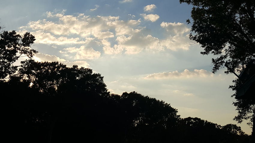 Just Original Low Angle View Cloud - Sky Beauty In Nature Branch Nature Outdoors No People Beautiful Day Beauty In Nature Louisiana Louisianaphotography Louisiana Skies Eye Of Ky Lovely Louisiana Nature No Fliter  No Edits No Filters