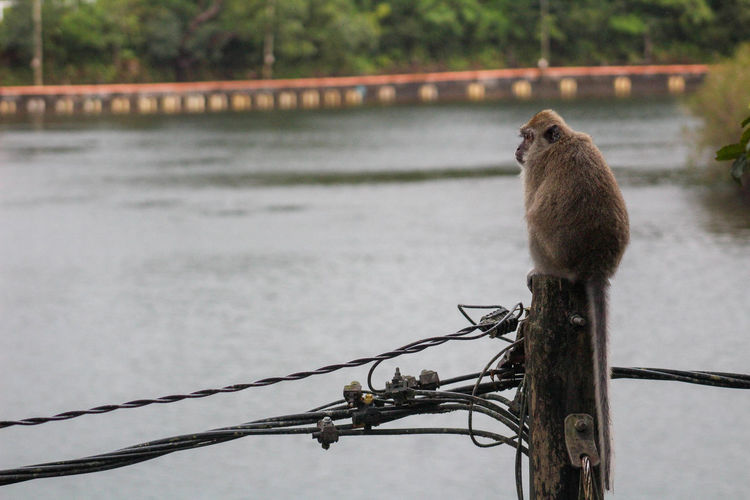 Leave me Alone here Animal Themes Animal Wildlife Animals In The Wild Bird Cable Day Focus On Foreground Monkey Nature No People One Animal Outdoors Perching Tree