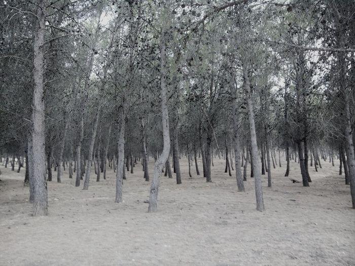 Trees SlenderMan