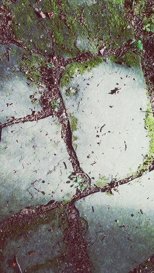 Waldspaziergang Stones Ground Boden Gehweg Weg Wege Und Strassen Straße Steine Nature Natur