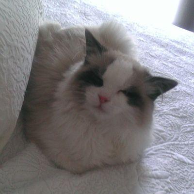 El que más me quiere Srenrique Gatolicismo Gato Cat miamor