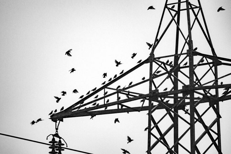 Animal Animal Themes Animal Wildlife Animals In The Wild Bird Cable Clear Sky Day Electricity  Flock Of Birds Flying Group Of Animals Large Group Of Animals Low Angle View Nature No People Outdoors Power Supply Silhouette Sky Vertebrate