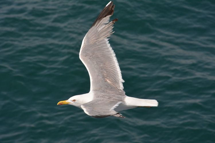 Close-up of white bird flying over water
