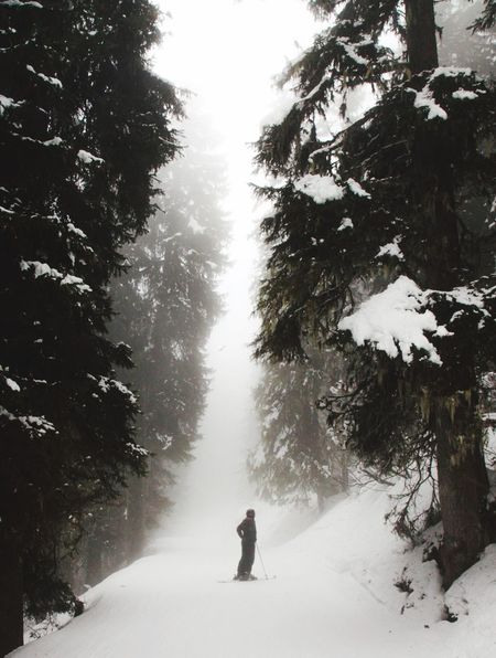 Ski Forest Snow Switzerland Holidays Huge Trees Sky Fog Epic Majestic Nature Clouds Light Contrast