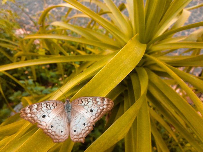 Encontrei voltando da escola 💞Beauty In Nature Nature Fauna Butterfly Nature Fragility Animal Natureza Borboletas Bonita Beautiful Linda Adobelightroommobile Adobe Asuszenfone2 Asus