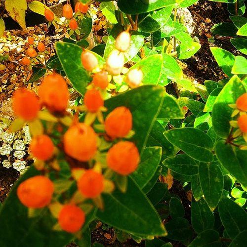 Flowerlove Flowers Flowerbeds Buddingflowers HollyBliss Summer2014