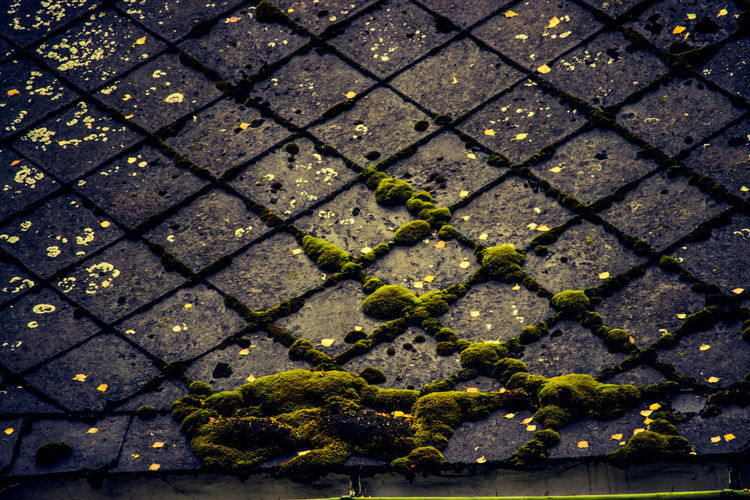 Full frame shot of footpath with moss