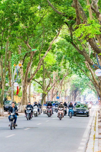 Bicycles parked on road along trees