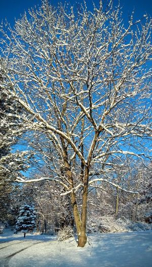 Outdoors Day Tree Blue No People Nature Bare Tree Beauty In Nature Winter Cold Temperature Close-up Shades Of Winter