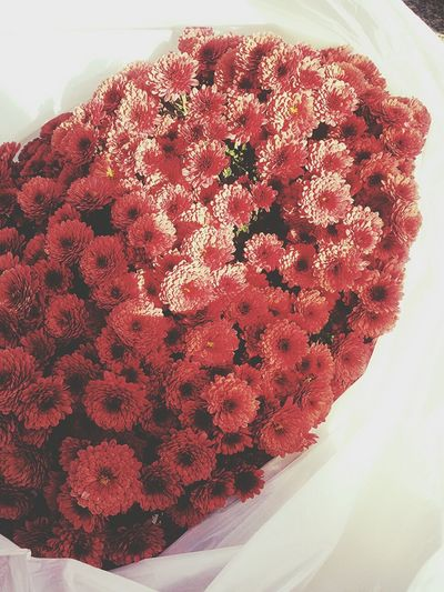 Flowers Beauty Red
