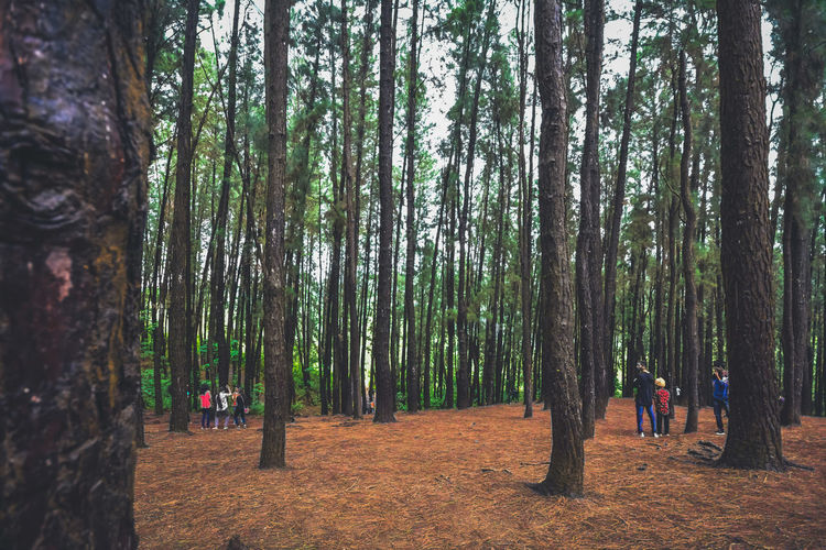 People in forest