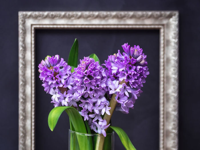 Flower Flowering Plant Vulnerability  Freshness Fragility Plant Purple Petal Nature Beauty In Nature No People Inflorescence Close-up Flower Head Focus On Foreground Window Growth Day Glass - Material Plant Part Outdoors Flower Pot Flower Arrangement