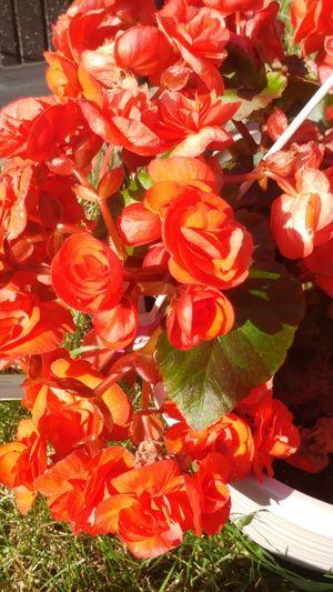 Flower Flower Head Red Close-up