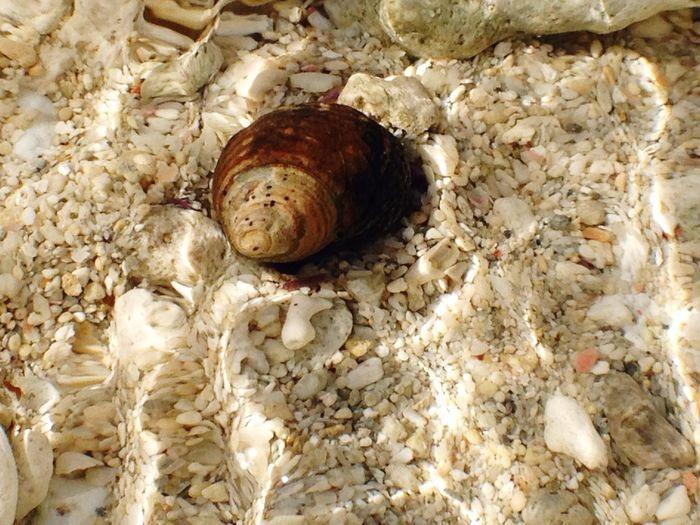 Close-up of shells shells