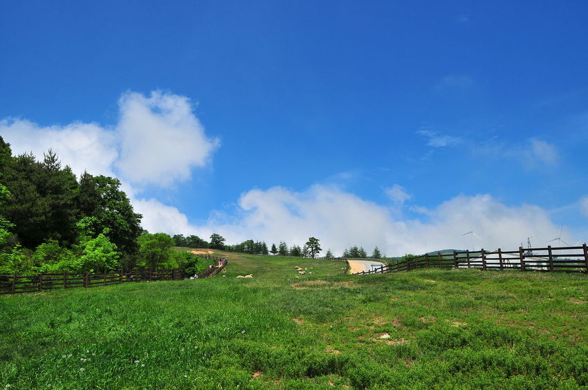 Beauty In Nature Cloud Cloud - Sky Cloud And Sky Cloud_collection  Clouds And Sky Cloudscape Grass Grassland Landscape Nature Pasture Pasture Fence Pasture Land Pasture, Paddock, Grassland, Pastureland PastureLand Scenics Sky