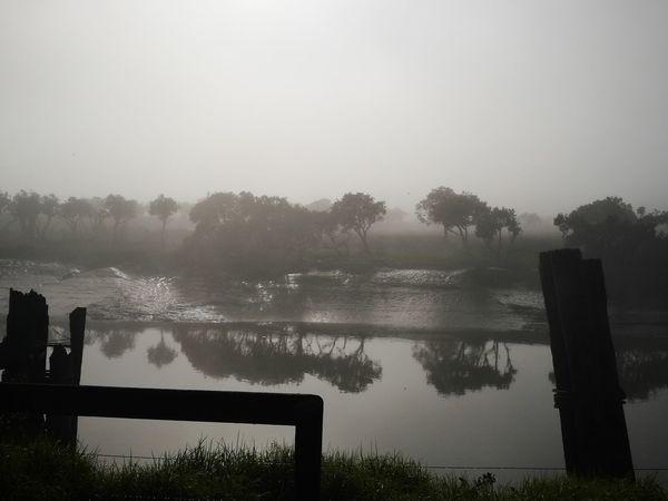 Mist reflection mangroves trees river