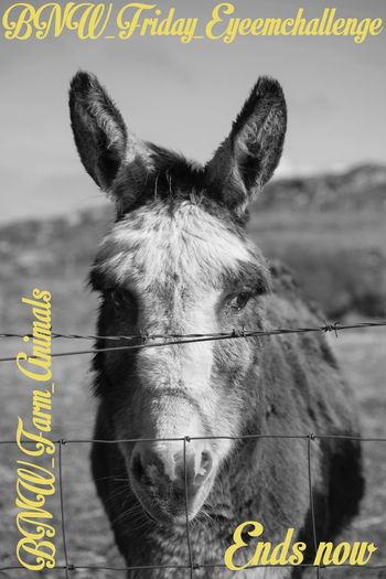 Bnw_friday_eyeemchallenge BNW_farm_animals the end :) thanks for the submissions! Sorry for a bit closure delay :)