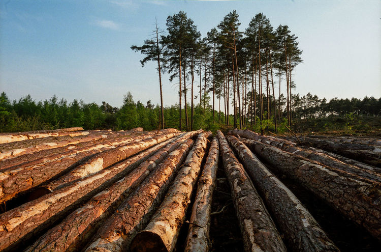 Block Clogs Cutting Cutting Trees Deforestation Deforestation Effect Deforestration Environment Environmental Damage Environmental Issues Forest Landscape Log Logs Lumber Industry Nature Nature No People No People, Outdoors Stack Timber Tree Tree