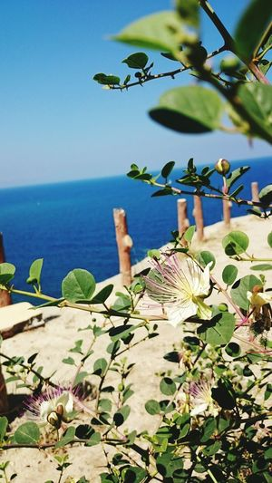 Flower Sea View