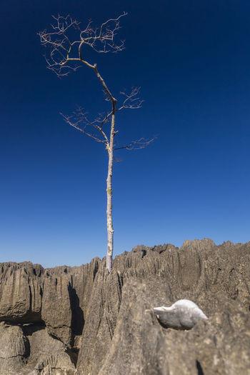 Dead tree on rock against sky