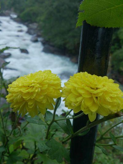 Flower in river