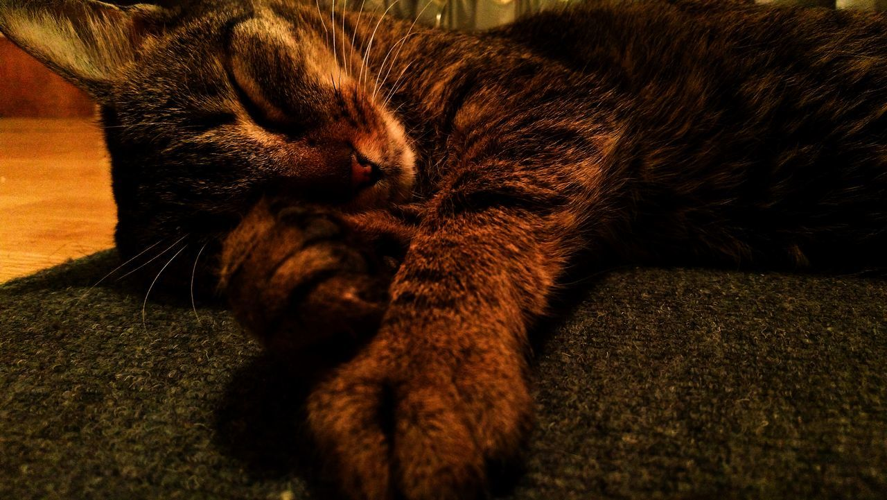 domestic cat, pets, one animal, animal themes, domestic animals, sleeping, feline, relaxation, mammal, cat, indoors, eyes closed, resting, lying down, whisker, no people, home interior, comfortable, close-up, ginger cat, nature, day