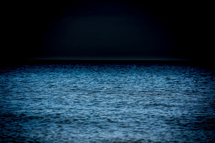 Beach Beauty In Nature Bird Blue Dark Lonely No People Rippled Sea Space Tranquil Scene Water Wave
