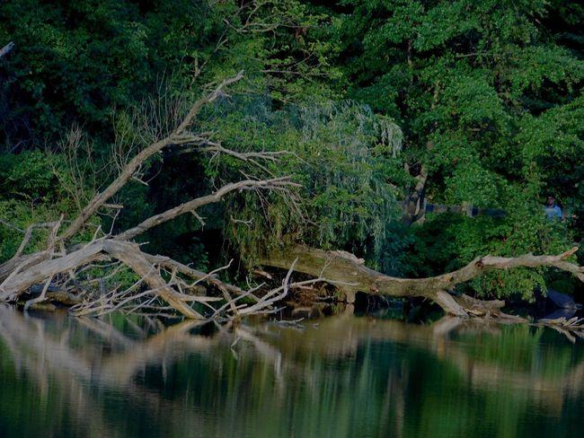 Nikon Transcendence Universe EyeEm Best Shots