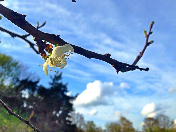 Spring Flowers EyeEm Nature Lover