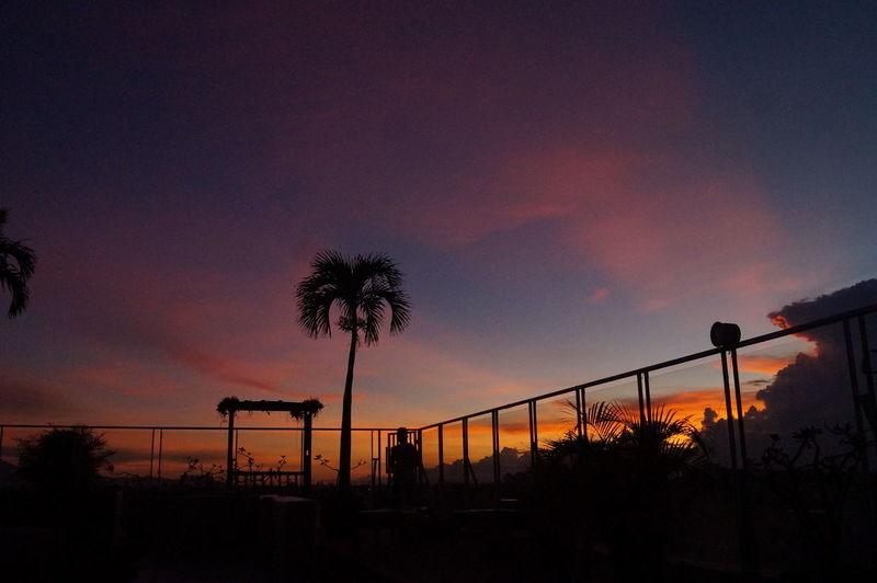 Silhouette Night Sunset Tree Dramatic Sky No People Outdoors Sky