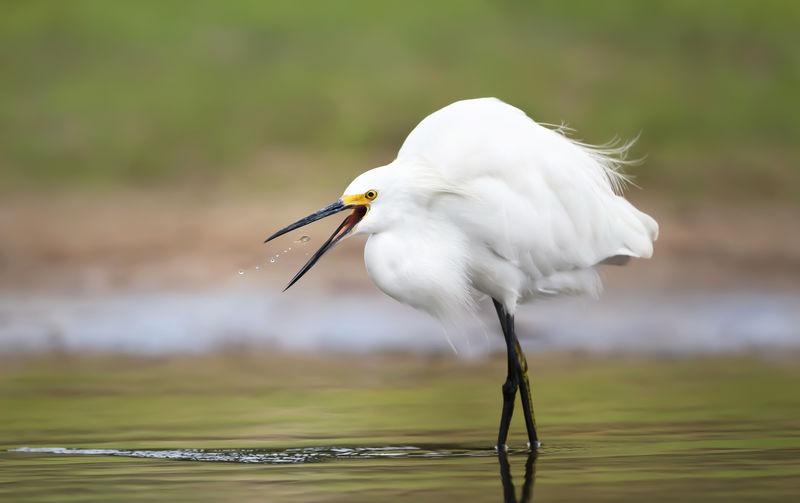 White bird perching on a lake