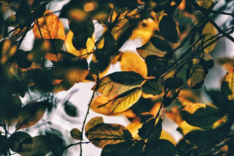 Tree Leaf Close-up