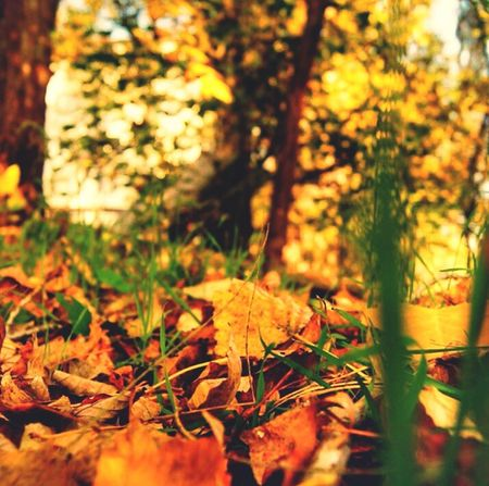 осень Лес краснодар листья краски природы Hi! Россия Hello World Nature Russia Look Beutiful  Photo Forest Обрывки памяти Карасун Autumn Autumn Colors Leaves