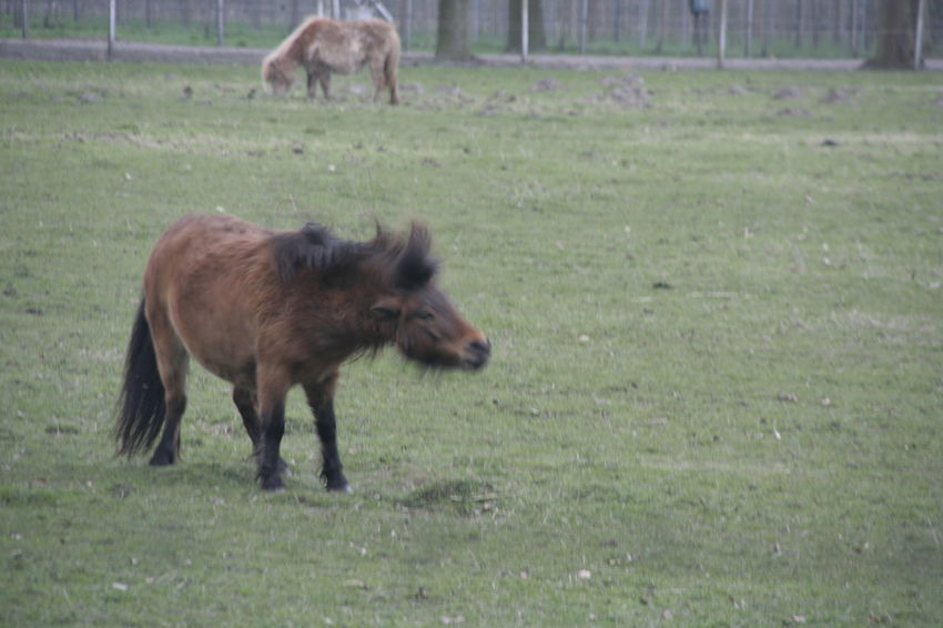 Animal Themes Day Domestic Animals Field Full Length Grass Grassy Mammal Nature Pets Shuffle Standing Two Animals Wag