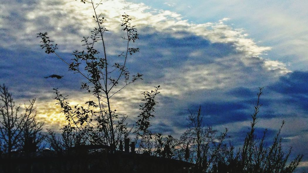 Sky Tree Cloud - Sky Silhouette Nature Low Angle View No People Day Growth Outdoors Sunset Beauty In Nature Bird Flying
