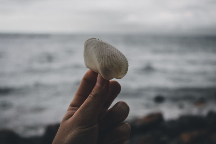 Close-up of hand holding shell over sea against sky