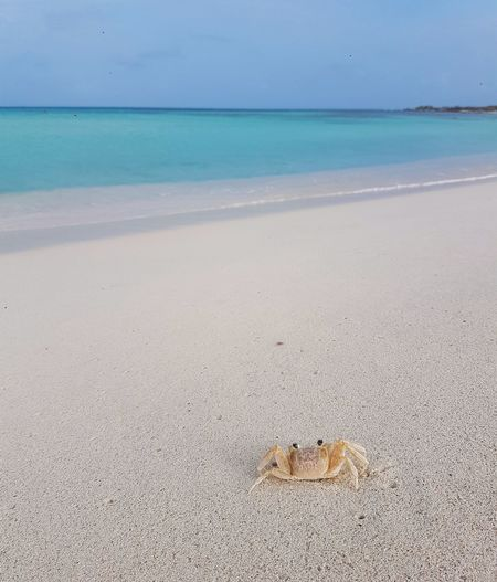 crab views Aruba Crab No People Focus On Foreground Samsungphotography Phoneography Samsungphotography Water Sea Beach Sand Wave Blue Sun Sky Horizon Over Water Landscape Seascape Surf Summer Exploratorium Visual Creativity The Great Outdoors - 2018 EyeEm Awards