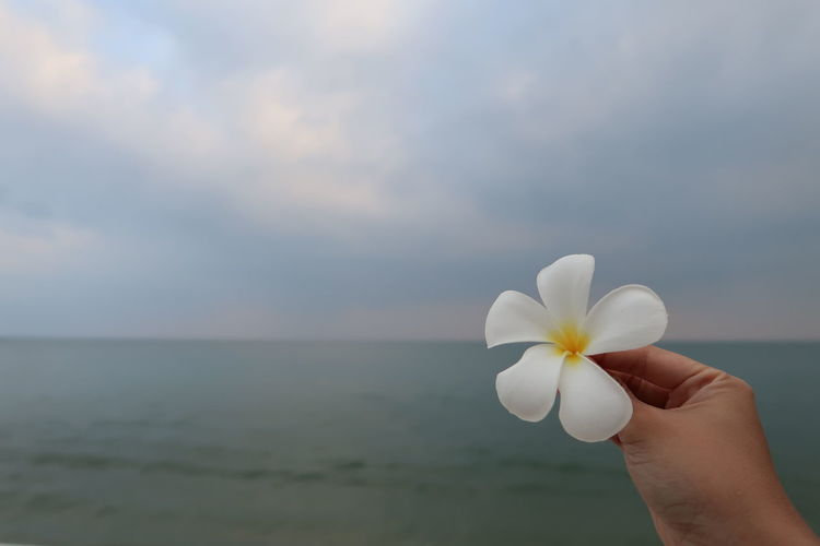 Close-up of hand holding white rose against sea