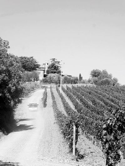 Clear Sky Tree Agriculture Nature Outdoors No People Day Field Rural Scene Growth Landscape Road Scenics Beauty In Nature Sky Italy🇮🇹 Montepulciano Toscana Winefields Car Driving In The Dust Black And White Photography Grapes 🍇 Winery View Wine Moments Winery